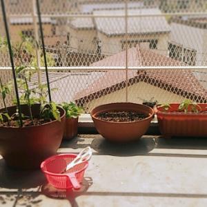 プランター菜園