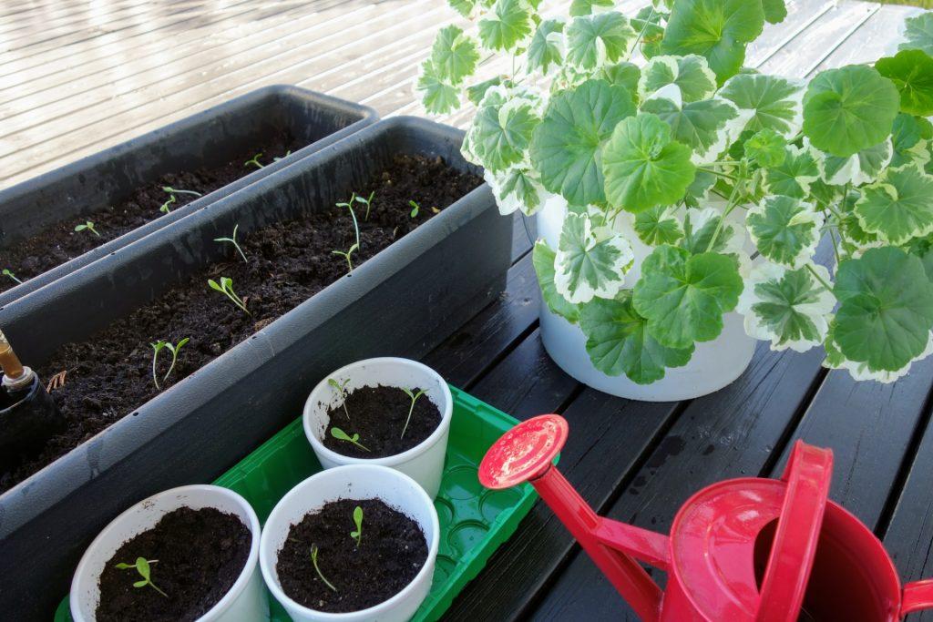 ベランダ菜園初心者におすすめの簡単に育てられる野菜と始め方を紹介