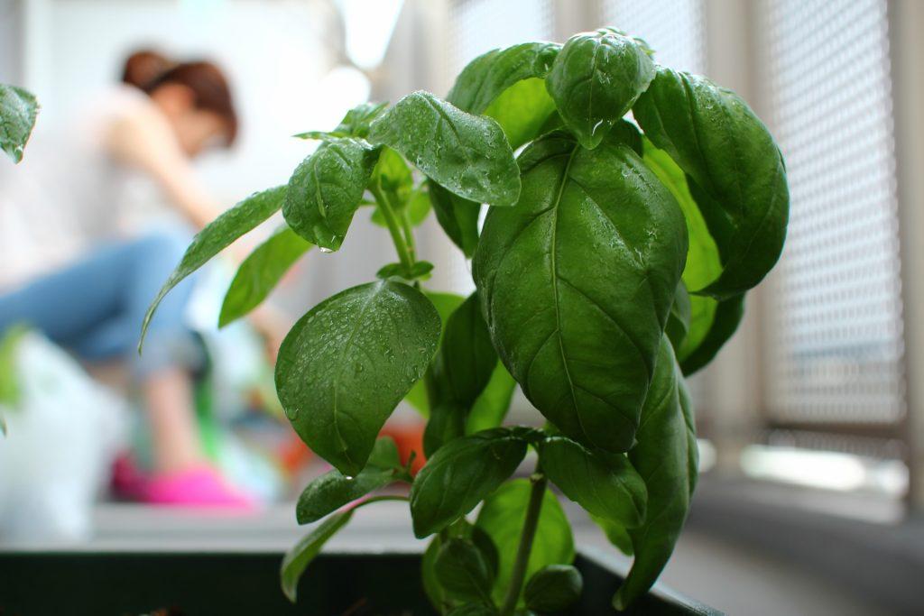プランター栽培の基本は土作り!ベランダで簡単に家庭菜園を楽しむ