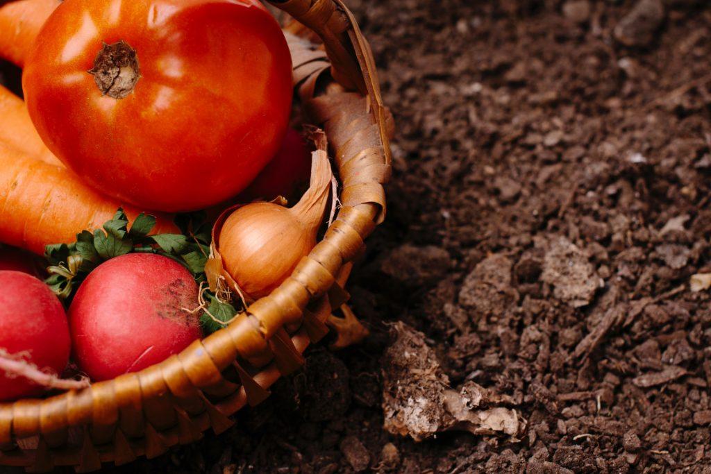 失敗しない家庭菜園の土作り!初心者でも簡単にできる畑の土作りの基本