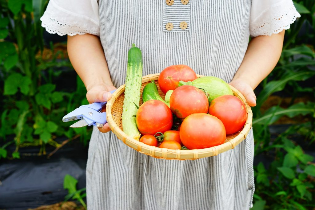 家庭菜園の魅力にハマり趣味にする人が続出!人気の家庭菜園に迫る