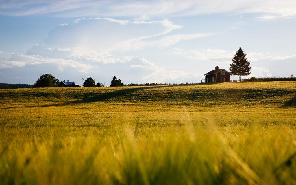 シェア畑で野菜作り!手ぶらで始める週末農業|料金と選び方