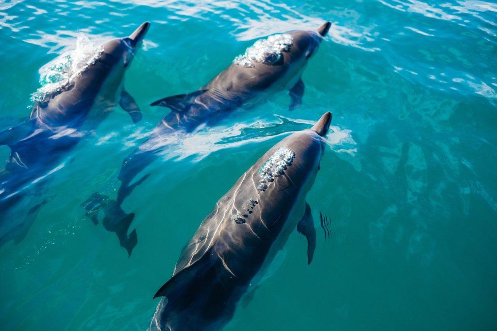 イルカと泳ぐ「ドルフィンスイム」ツアー10選|日本・ハワイ | ビギナーズ