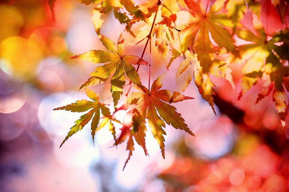 【見頃別】関東のおすすめ紅葉スポット10選!9月から12月まで紅葉狩り可能