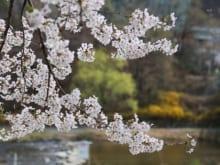 東京のお花見穴場スポット20選!公園・寺院などのんびり桜を楽しみたい人必見