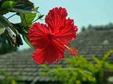 沖縄旅行の費用を徹底解説!おすすめの時期や旅費を安く抑えるコツも