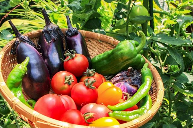 方 夏 野菜 育て トマトのマルチは?