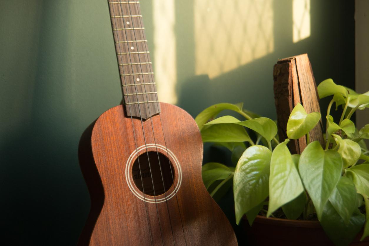 ウクレレと観葉植物