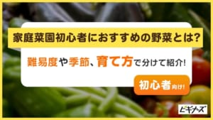 家庭菜園初心者におすすめの野菜を解説