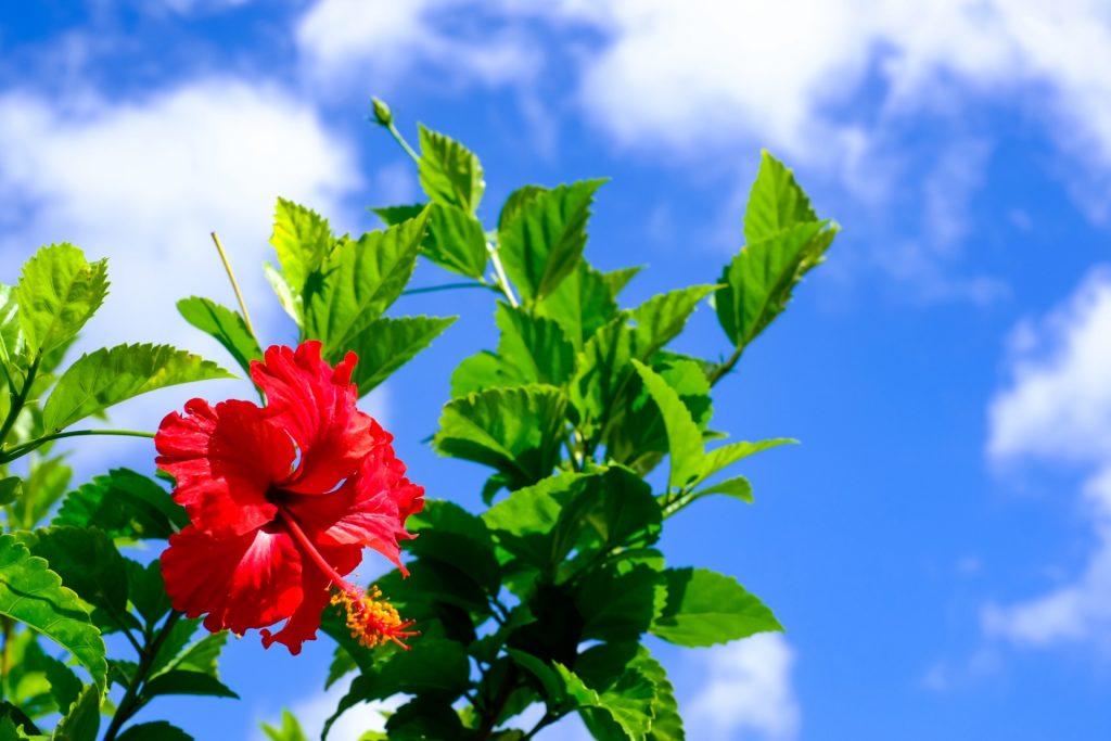 沖縄旅行はツアーでお得に!おすすめ観光スポットや周辺ホテルまとめ