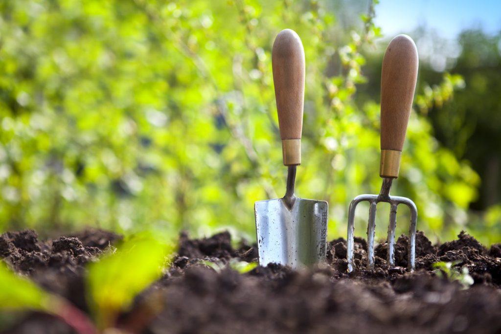 初心者でも簡単にできる!トマトをベランダで育てる方法とおすすめ品種